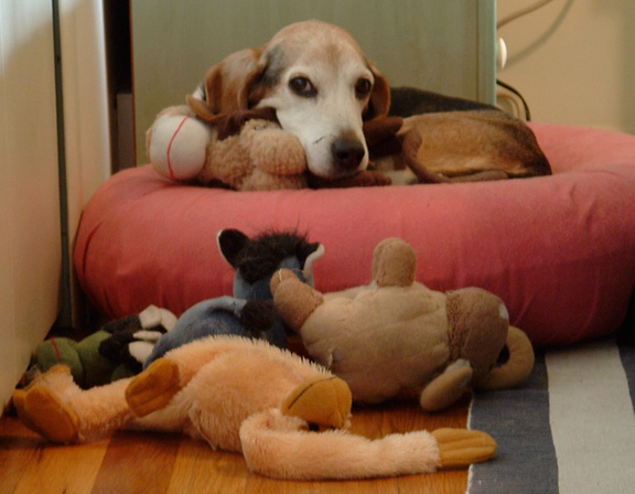 Gertie on bed with stuffed animals.