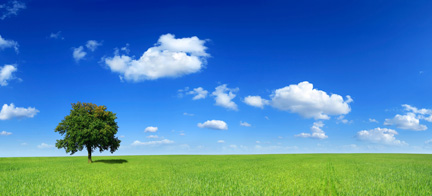 Grassy field with tree and blue sky